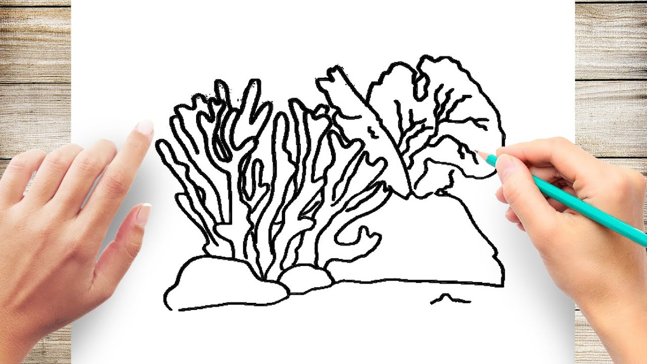 How To Draw Coral Step By For Kids