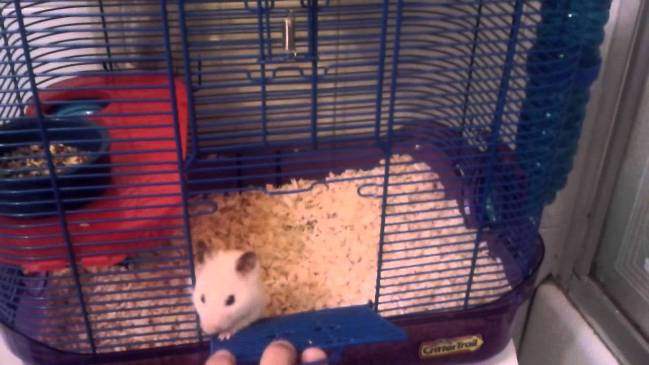 syrian hamster cage size youtube. Black Bedroom Furniture Sets. Home Design Ideas