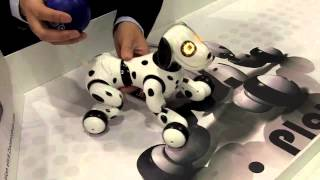 Zoomer, The Perfect Interactive Family Pet From Spin Master.  First Look From Toy Fair 2013
