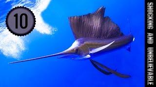 видео Самые быстрые рыбы
