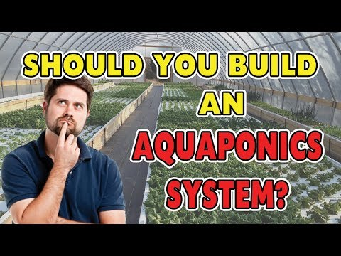 🌿 17 Benefits of Aquaponics - SHOULD YOU BUILD A SYSTEM? 🌿