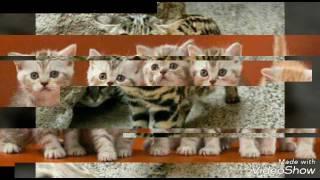 Красивые коты и котята!🐈