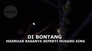 DI BONTANG MASMUAR RASANYA SEPERTI MUSANG KING