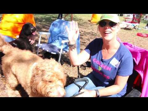 Moss Creek Goldendoodles ROMP 2017