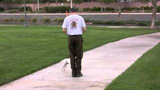 How To Train Your Dog Not To Pull - Loose Leash Walking