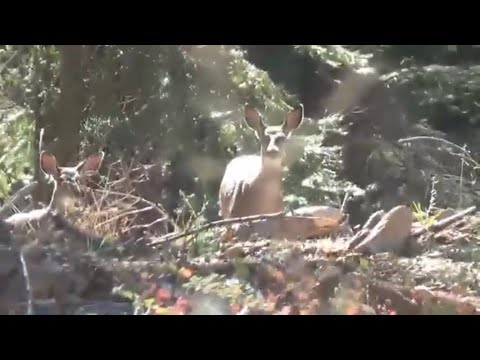 4 Day Solo Hunting In California Public Land
