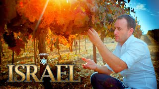 I AM ISRAEL Clip - Vineyards of Judea and Samaria
