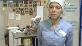 Ветеринары фиксируют рост инфекционных заболеваний у домашних животных