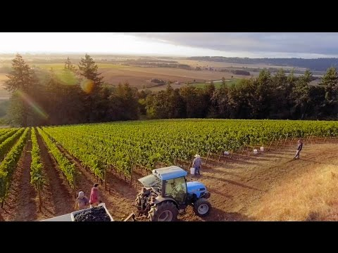 Willamette Valley – Wine Region of the Year