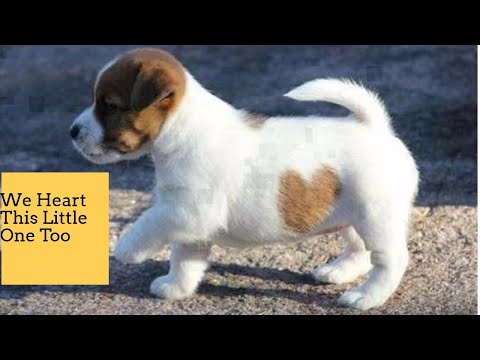 Pets At Home Dog Coats - How To Remove Pet Hair And Keep Dog Coat Shiny And Healthy