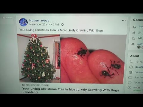 VERIFY: Bugs on Christmas trees   YouTube