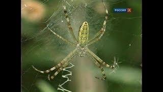 Жизнь в паутине. Рассказы о природе.