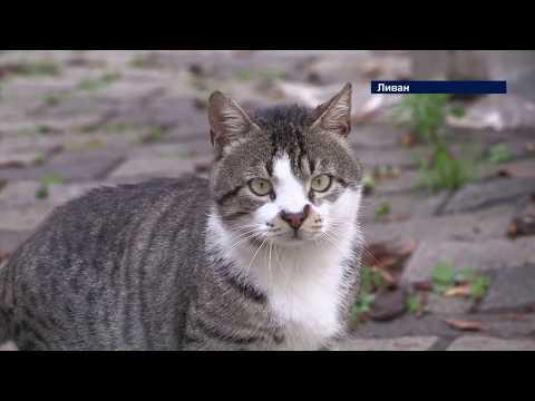 #МировыеНовости: Тысячи кошек в Ливане стали бездомными из-за коронавируса