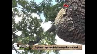 Repeat youtube video Popas în Țara de Sus - Cajvana, așezământul oamenilor vrednici