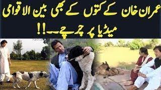 Tehrika Insaaaf Chali PTI Funny Dogs
