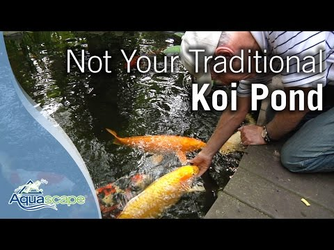 Not Your Traditional Koi Pond