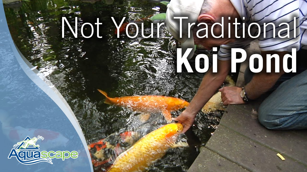 Not your traditional koi pond youtube for What do you need for a koi pond