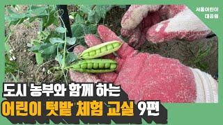도시농부와 함께 하는 어린이 텃밭 체험 교실 9편 l 열매채소 수확하기썸네일