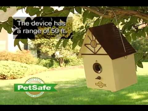how-to-stop-a-dog-from-barking-outside---petsafe®