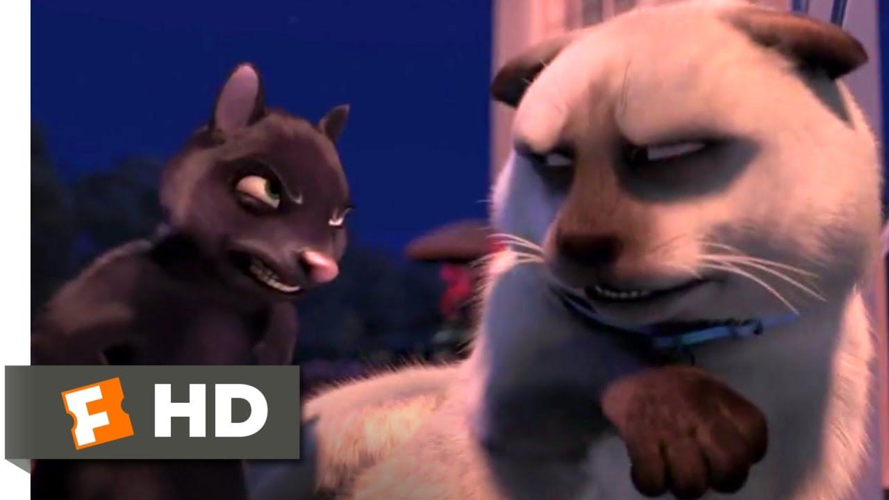 Over The Hedge 2006 Cat Vs Skunk Scene 6 10 Movieclips Youtube