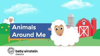 Animals For Kids to Learn   Animals Around Me   Baby Einstein