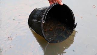 สุดยอด !! วิธีดักจับปลาซิวอ้าว มาปล่อยลงบ่อเลี้ยง