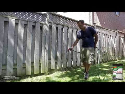 How To Control Lawn Moss With Frankie Flowers