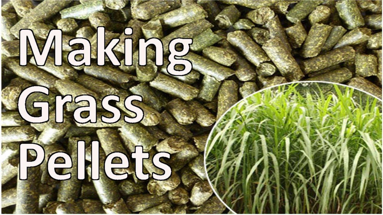 Make Biomass Pellets ~ Grass pellet plant making biomass fuel pellets youtube