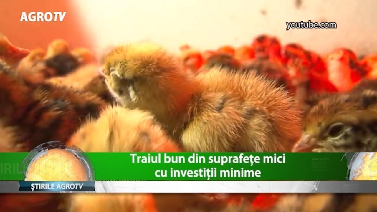 cât de profitabil este să câștigi bani pe găini
