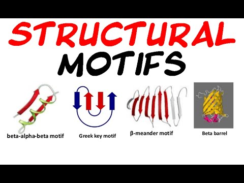 Structural motifs of protein