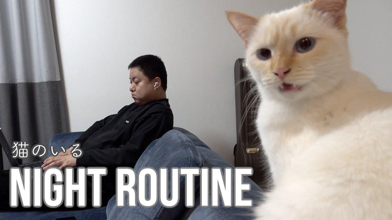 猫とゆめまると私のナイトルーティン
