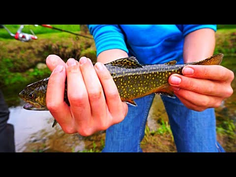 Pa trout fishing 2017 youtube for Free fishing day 2017 pa