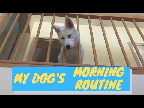 my dogs morning routine (2019)