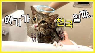 I decided to take a bath for a fat cat! (Shocked! It wasn't fur, all fat)