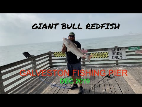 Pier Fishing For GIANT Redfish [ Galveston Fishing Pier ]