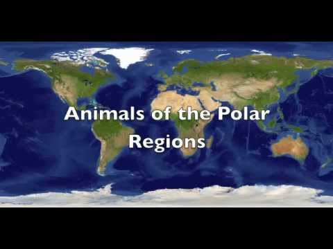Animals of the Polar Regions