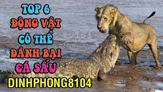 6 Loài Động vật có thể đánh bại Cá Sấu
