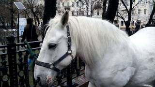 Ретро-трамваи-2016. Конка уезжает, коняшки остаются.