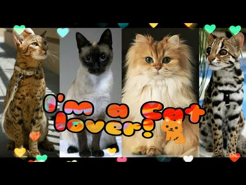 Top List of Famous Cat Breeds