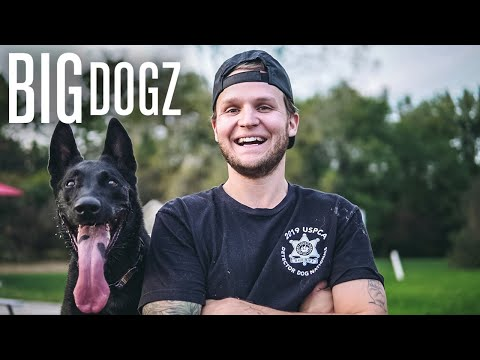 Meet Logan Pauls Celebrity Dog Trainer | BIG DOGZ