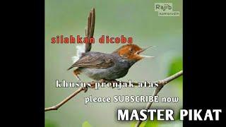 Suara Manggil/Mikat Burung Prenjak 100% top