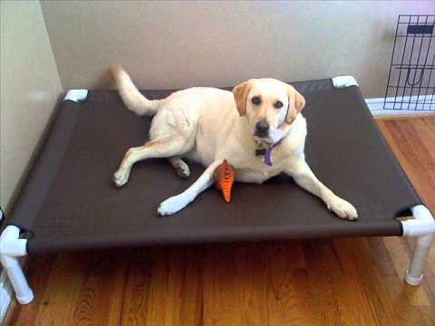 Raised Dog Beds For Large Dogs