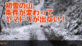 今朝初雪が降りました。 山の状況が変わり、獲物が出にくい状況でした。...