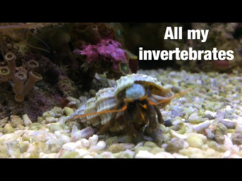All My Marine Invertebrates