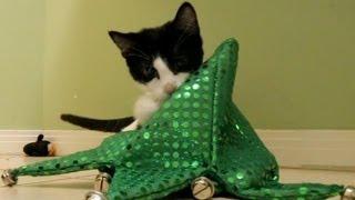 Kittens VS. Jester Hat (FUNNY KITTY FUNNY & FUNNY HAHA FUNNY)