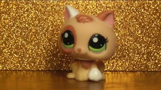 LPS:  Обзор котят LPS