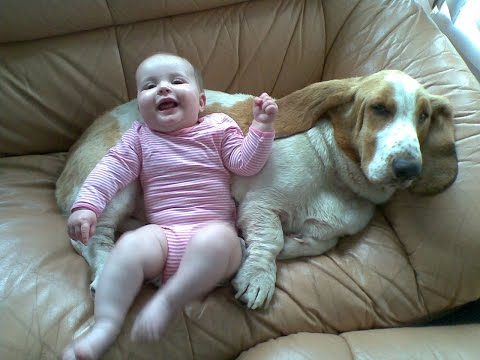 Basset Hound Dog kisses and Baby giggles – Dog Loves Baby Compilation