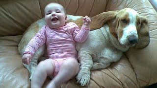Basset Hound Dog kisses and Baby giggles - Dog Loves Baby Compilati...