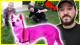 PINK HAIR DYE ON ROOMMATES DOG PRANK | Prank Wars