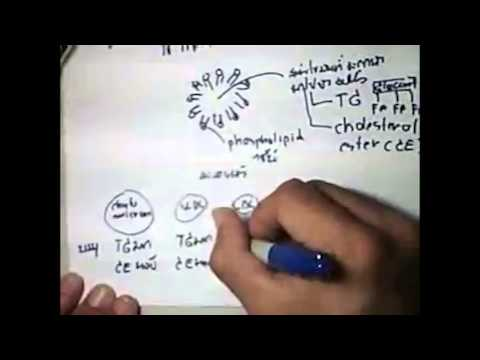 lipid metabolism แบบแรก (Complete) thailand